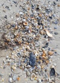sgi-shells