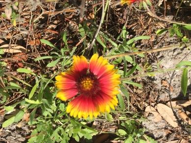 t_flower