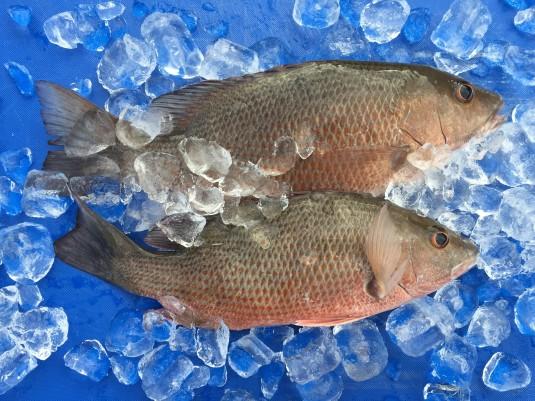 A_ fish 2