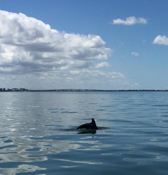 ck_dolphin